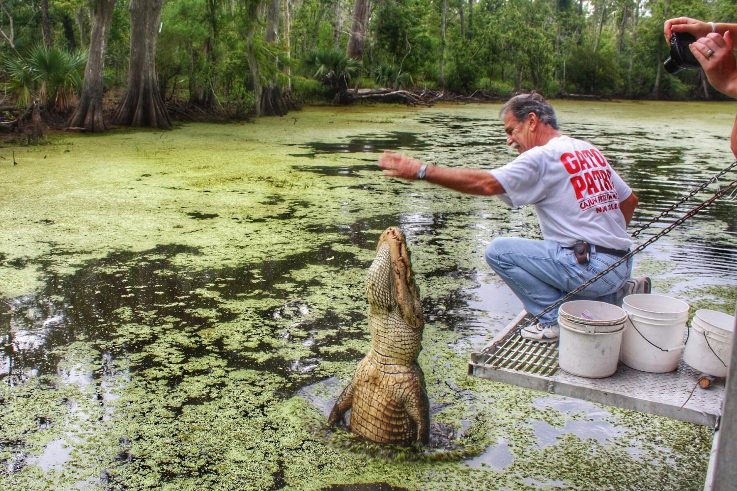 Swamp Tour New Orleans >> Destrehan Plantation Swamp Tour From New Orleans