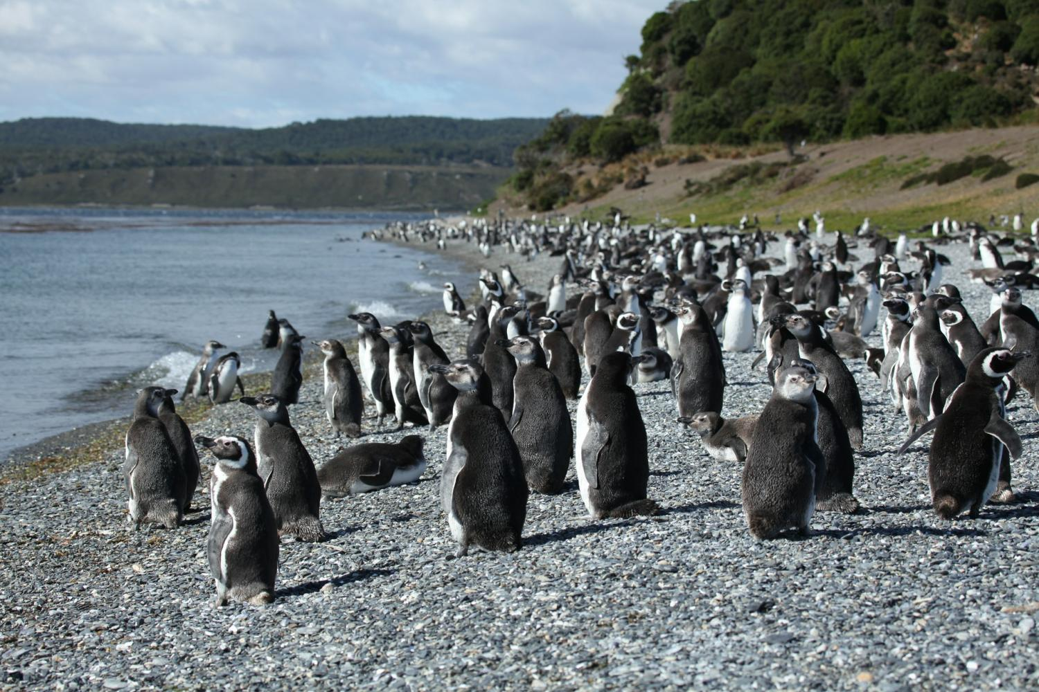 Walk with the penguins on Martillo Island