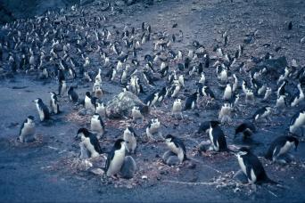 Gray Line Catamaran Voyage to Seal, Bird & Penguin Islands