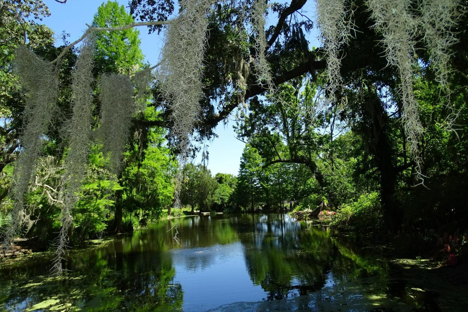Magnolia Plantations & Gardens Tour From Charleston