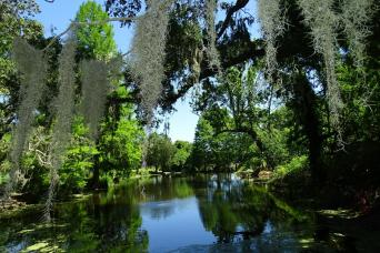 Gray Line Magnolia Plantations & Gardens Tour From Charleston