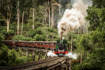 Penguin Parade Tour & Puffing Billy Train Ride Fro