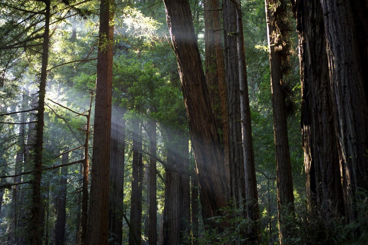 Make your way to the North Bay for a redwood adventure