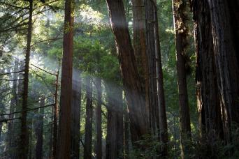 Muir Woods & Sausalito Tour From San Francisco