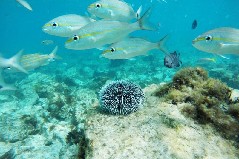 Aruba Diving