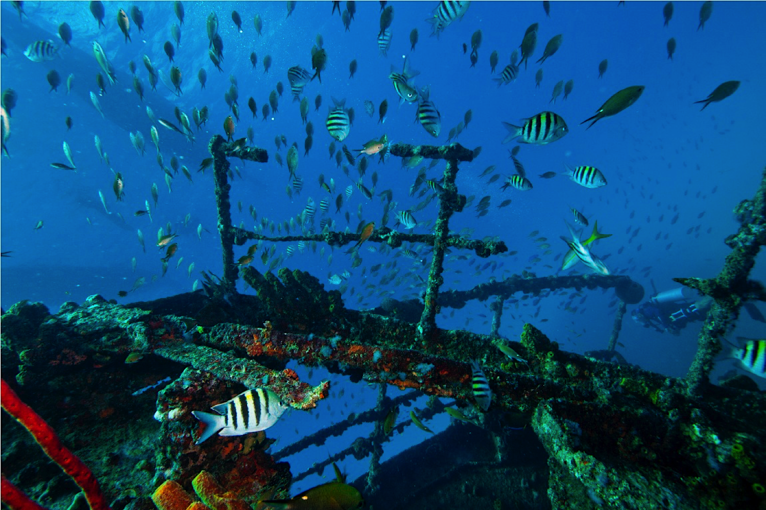 Aruba Diving Wreck
