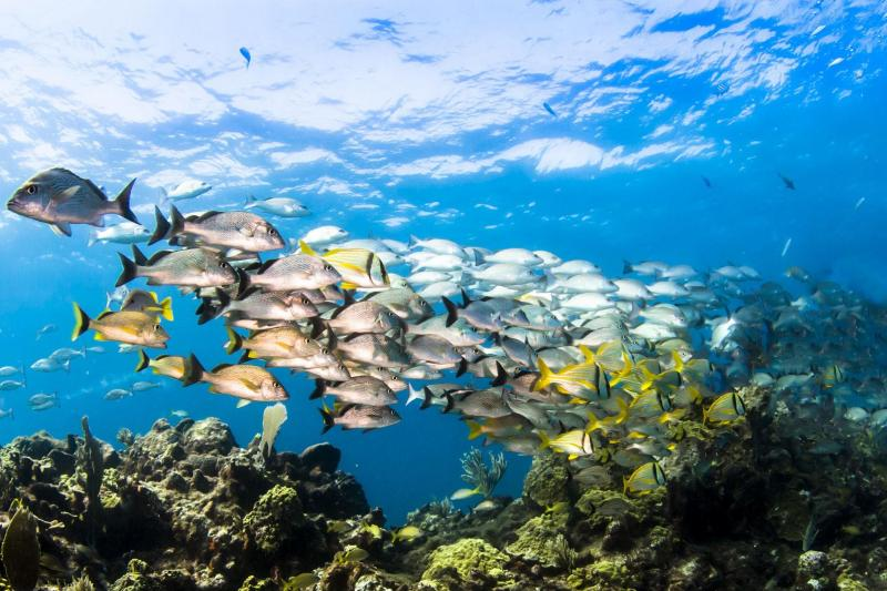 Aruba snorkeling