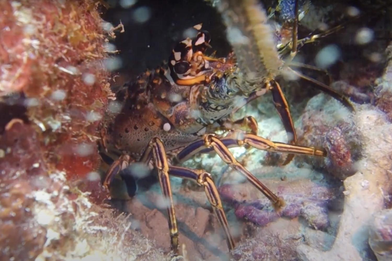 Underwater Bayahibe