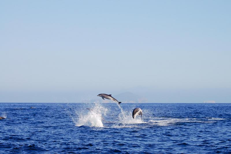 Swimming with Dolphins in Le Morne