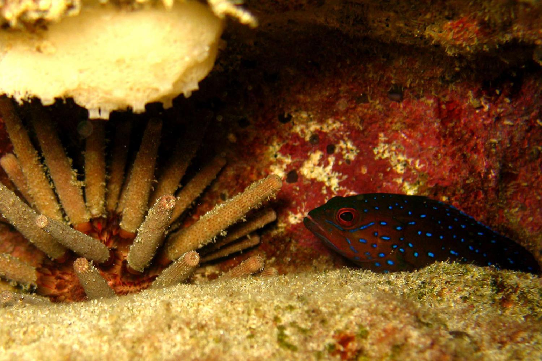 Scuba Diving Boa Vista