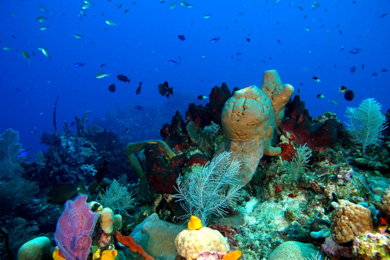 Reef Cape Verde