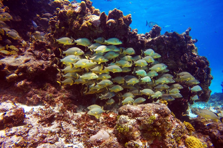 Costa Rica reef