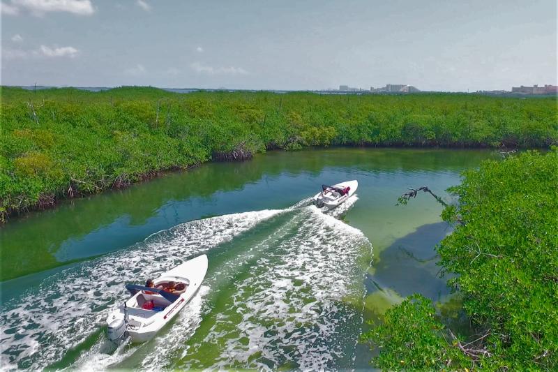 Speedboat tour through mangroves