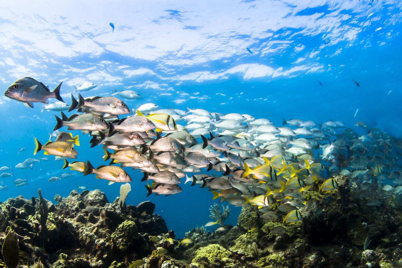 diving Aruba