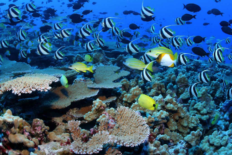 Snorkeling ScubaCaribe