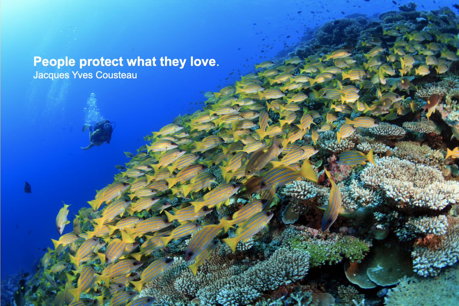 AWARE Coral Reef Conservation Specialist