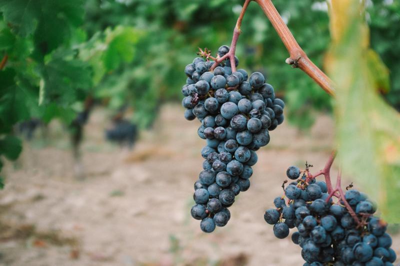 Sicilian Wine Tasting