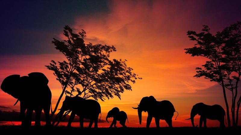 Elephants exploring the savannah