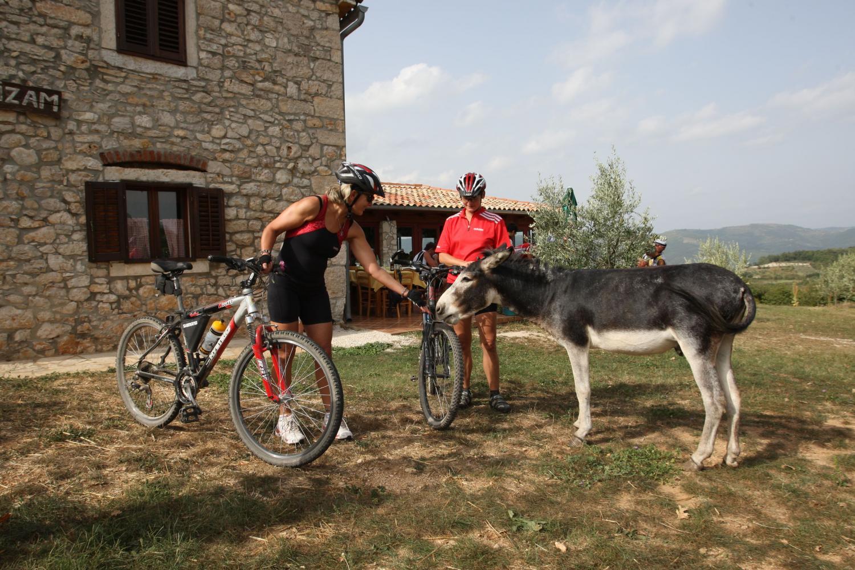 Biking Istria
