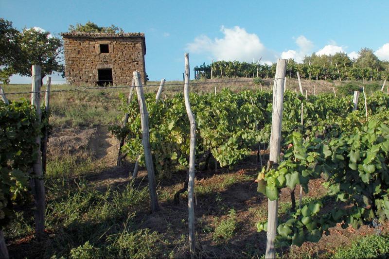 Grožnjan sightseeing and winetasting