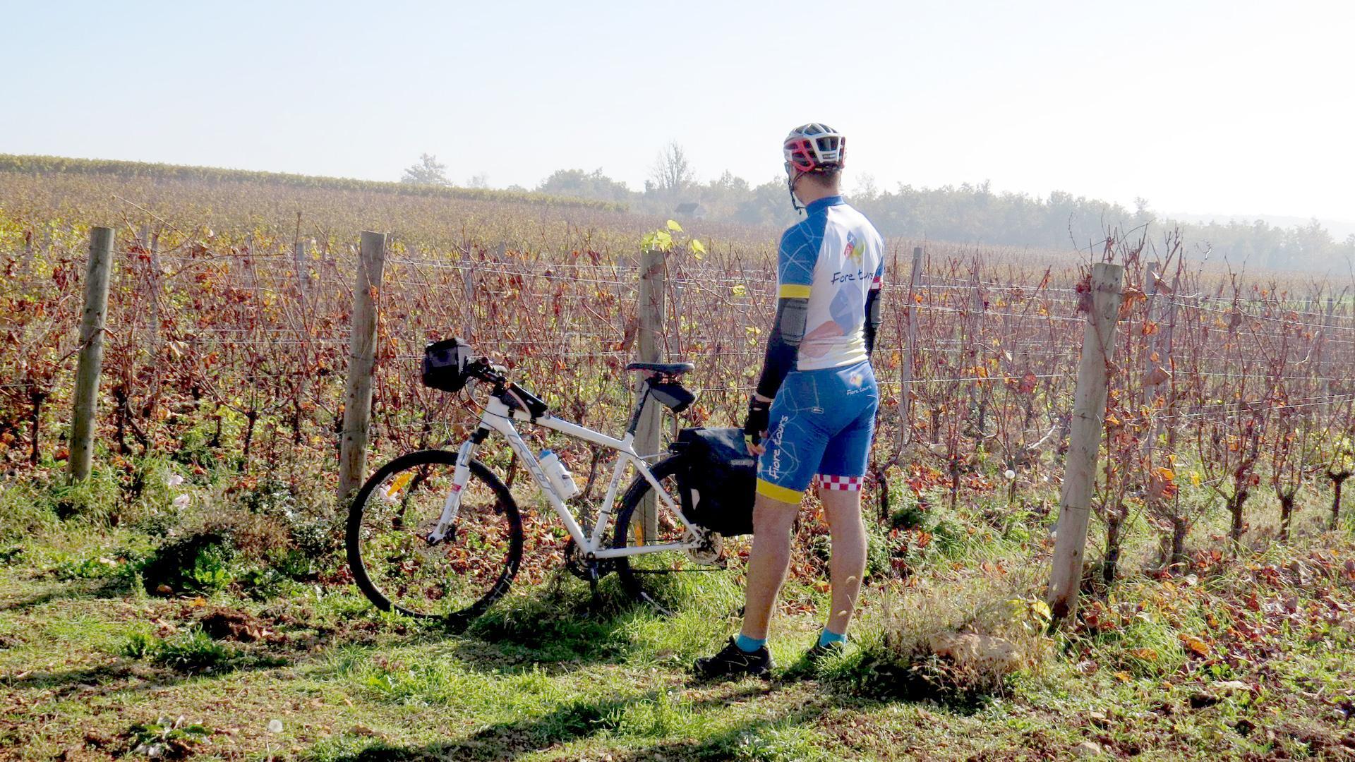 Istrian wine roads cycling tour