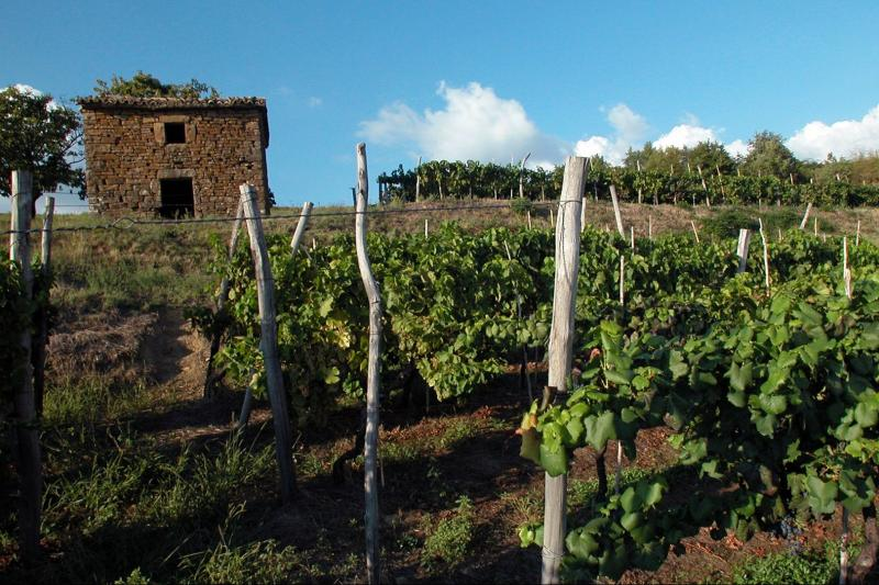 Tasting the wines and culinary specialties of Istria