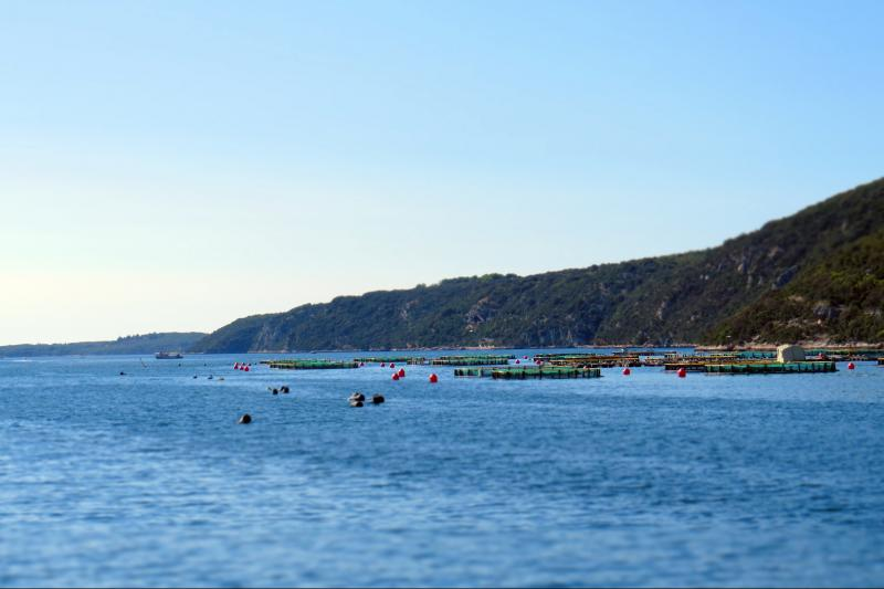 Prekrasan pejzaž Limskog zaljeva