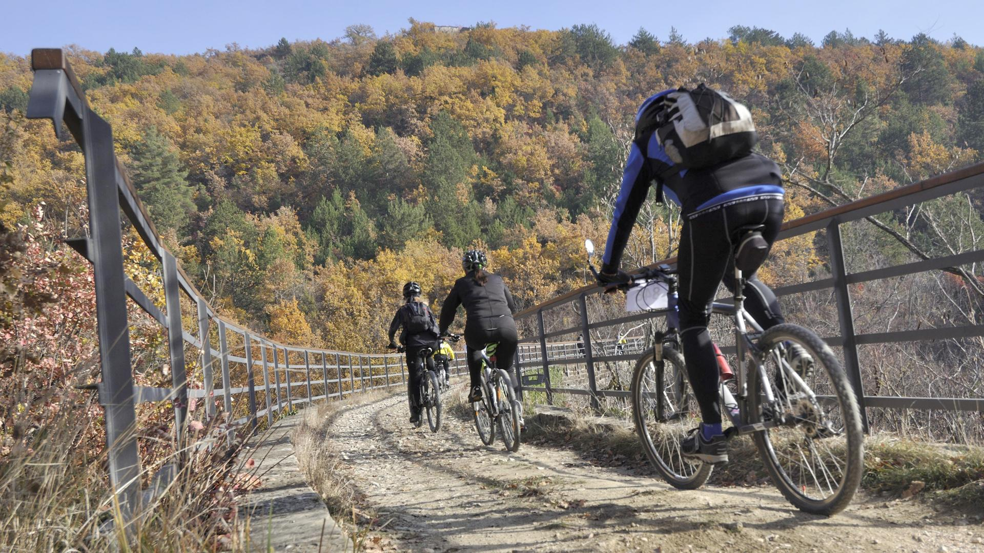 Bicikliranje vinskim cestama Istre