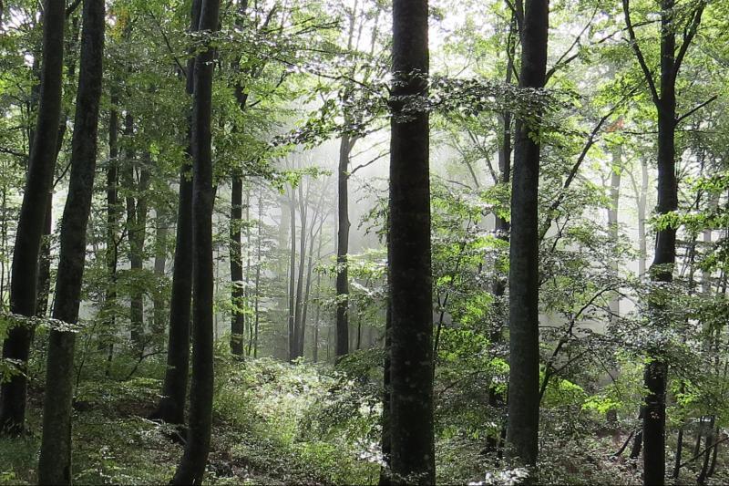 Flora i fauna, ekosustav