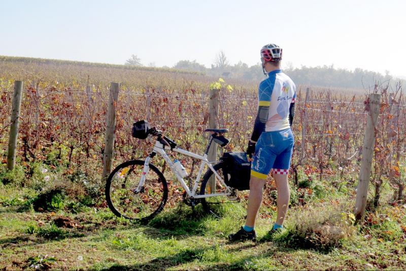 Bicikliranje kroz zadivljujuću Istru