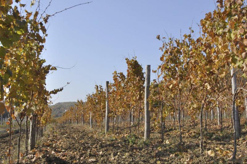 Posjet istarskim vinarima