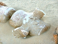 Part of a whale Skeleton in Wadi Hitan