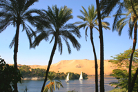 Traditional Feluccas on the Nile in Aswan