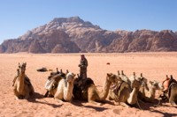 Camels in the desert at Wadi Rum, Jordan