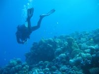 Searching for a missing diver in the Eel Garden, Dahab, Egypt