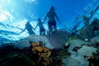 Family snorkelling over colourful coral reefs