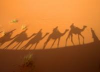 Camel trek across the Egyptian Desert