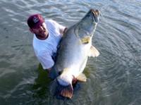 Big Nile Perch at Lake Nasser, Egypt