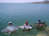 Trio of Nile Perch on Lake Nasser, Egypt