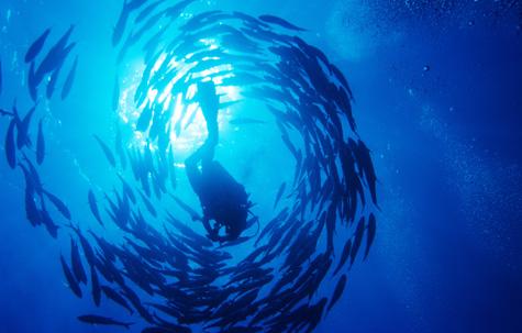 Dahab 10 Dive, Egypt tour