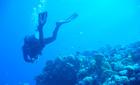 Diver in Dahab, Egypt