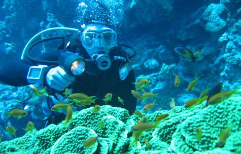 Dahab PADI Open Water, Egypt tour