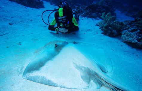 Dahab PADI Rescue Diver, Egypt tour