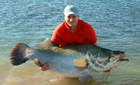 Huge Nile Perch, Lake Nasser, Egypt