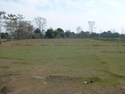 View of land for the eco lodge, Bardia, Nepal
