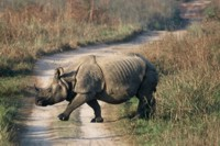 One horned rhino in Chitwan NP, Nepal