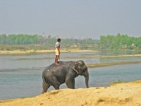 Man standing on an Elephant, Chitwan, Nepal