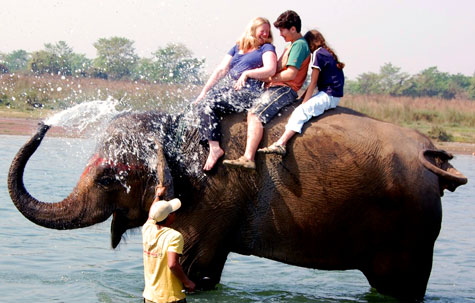 Elephant washing, Chitwan, Nepal
