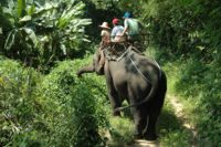 Elephant trekking Chiang Mai, Thailand