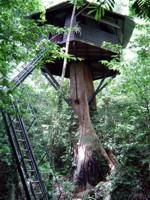 Treehouse at Khao Sok National Park, Thailand